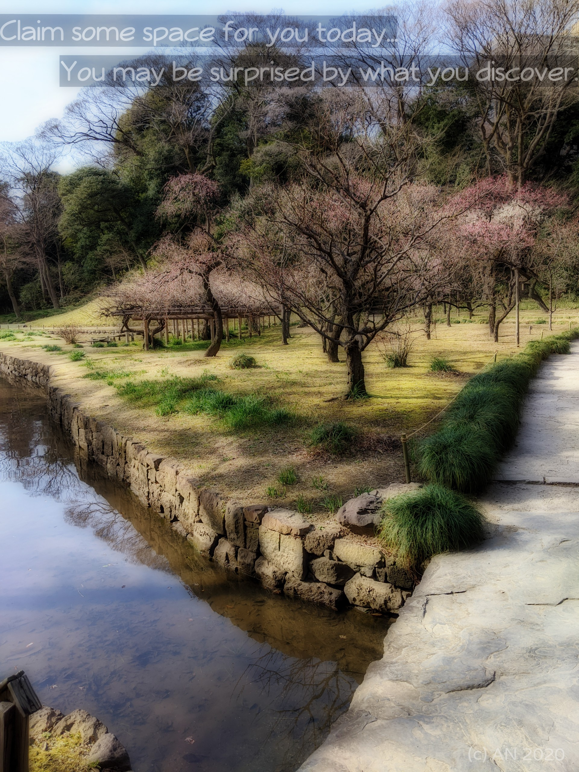 Picture of stream, garden and budding cherry blossoms
